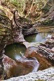 Rivier onder het bos Stock Fotografie