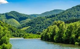 Rivier onder het bos in schilderachtige Karpatische bergen in su Royalty-vrije Stock Foto