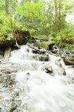 Rivier in Rainforrest Stock Foto