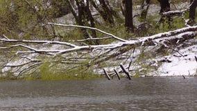 Rivier, rimpelingen op het water Gevallen boom in de sneeuw aan de andere kant stock videobeelden