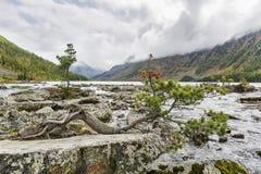 Rivier Shumi Multinskiyemeren De herfstlandschap van Altaibergen Royalty-vrije Stock Fotografie