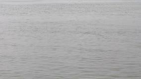 Rivier Sockeye Salmon Jumping stock videobeelden