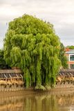 Rivier Trent Tree stock fotografie