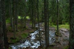 Rivier tussen bomen het donkere bos bij de bergen Royalty-vrije Stock Foto