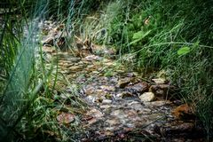 Rivier van natuurlijk water met stenen en omringd door vegetatie stock foto