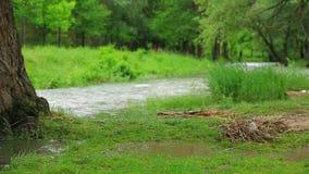 Rivier in Vloed die in Groen Park stroomt stock video