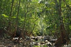 Rivier in wildernis stock foto
