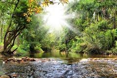 Rivier in wildernis, Thailand royalty-vrije stock foto