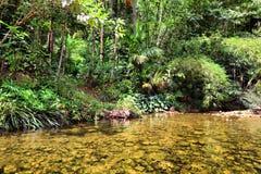 Rivier in wildernis, Thailand Stock Foto's