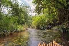 Rivier in wildernis, Thailand Royalty-vrije Stock Fotografie