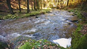 Rivier, wildernis, vallei, doubrava, cascade, de herfst, daling, kleur, Schilderachtig landschap, kleur, kreek, Tsjech, groen str stock video