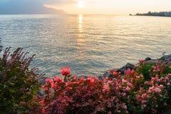 riviera Ελβετός Στοκ Φωτογραφία