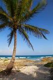 Riviera Maya Arkivfoton