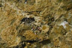 Riviera Maya coral reef on beach sand Mexico Stock Photos