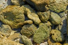 Riviera Maya coral reef on beach sand Mexico Royalty Free Stock Images