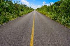 Riviera Maya jungle rainforest road. Of Mayan Mexico Stock Image