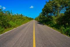 Riviera Maya jungle rainforest road. Of Mayan Mexico Royalty Free Stock Image
