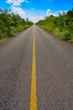 Riviera Maya jungle rainforest road. Of Mayan Mexico Royalty Free Stock Photography