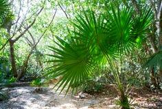 Riviera maya rainforest jungle Mexico Royalty Free Stock Images