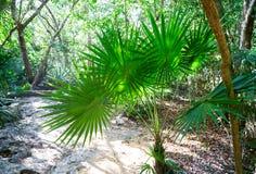 Riviera maya rainforest jungle Mexico Royalty Free Stock Photo