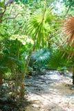 Riviera maya rainforest jungle Mexico Stock Photo