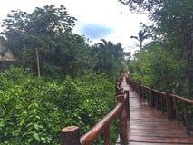 Riviera Maya stock image