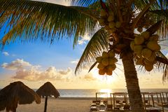 Riviera Maya sunrise beach in Mexico. Riviera Maya sunrise beach pal trees at Mayan Mexico Stock Photography
