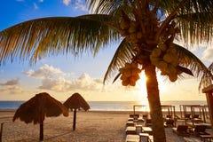 Riviera Maya sunrise beach in Mexico. Riviera Maya sunrise beach pal trees at Mayan Mexico royalty free stock photography