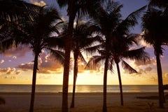 Riviera Maya sunrise beach in Mexico. Riviera Maya sunrise beach palm trees at Mayan Mexico royalty free stock image