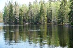 Rivierbank met dicht naald en vergankelijk bos, berk, pijnboom, sparren in het bos royalty-vrije stock foto