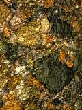 Rivierbed in Patagonië Stock Foto
