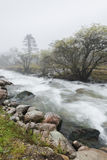 Rivierbomen in mist Stock Fotografie