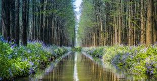Rivieren, stromen, bomen, bossen, de lente stock afbeeldingen