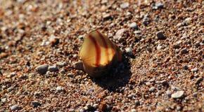 Riviergootsteen in het zand stock fotografie
