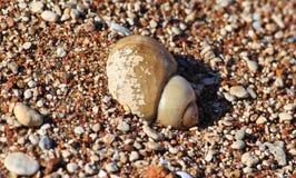 Riviergootsteen in het zand royalty-vrije stock foto's