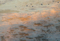 Rivierijs bij zonsondergang Stock Afbeelding
