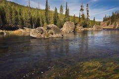 Rivierknipsel door pijnboombos in Yellowstone NP royalty-vrije stock foto's