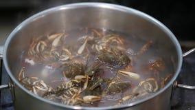 Rivierkreeften in een pan worden gekookt die stock video