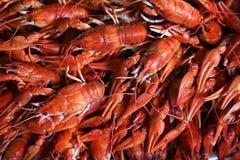 Rivierkreeften kanker Gekookte krabben voor voedsel Stock Fotografie