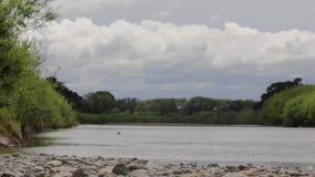 Rivierlandschap met bomen die met wind en een merel schudden stock video