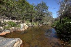Rivierlandschap van Caatinga in Brazilië stock foto