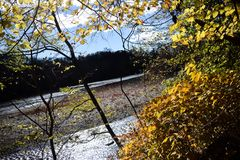 rivieroever Stock Afbeelding