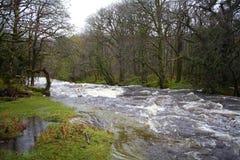 Rivierpijltje, het nationale Park van Dartmoor, Devon stock foto