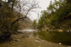 Rivierscène bij het Nationale Park van Great Smoky Mountains, de Verenigde Staten van Amerika Royalty-vrije Stock Foto