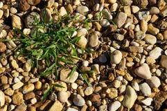 Rivierstenen met flard van grasachtergrond Stock Afbeelding