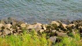 Rivierstenen met groen gras en water van bovengenoemde mening stock videobeelden