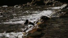 Rivierstroom in het tropische bos stock videobeelden