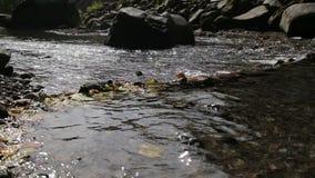 Rivierstroom in het tropische bos stock video
