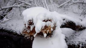 Rivierstroom met gevallen bomen in het bos in de winter stock videobeelden