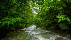 Rivierstroomversnelling in de bos Langzame motie stock video